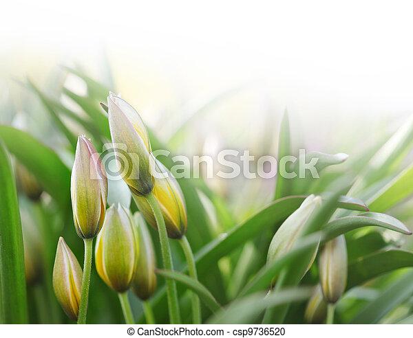 flower bud in green grass - csp9736520