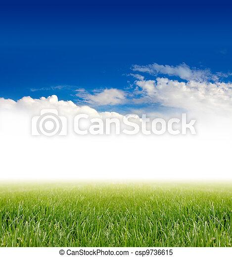 green grass under blue sky - csp9736615