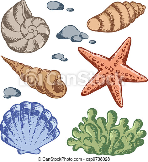 Sea shells drawings 1 - csp9738028