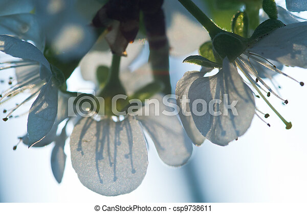 Flowers with stamens silhouette - csp9738611
