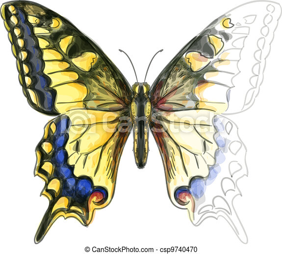 Butterfly Papillo Machaon. Unfinished Watercolor paint imitation. Vector illustration. - csp9740470