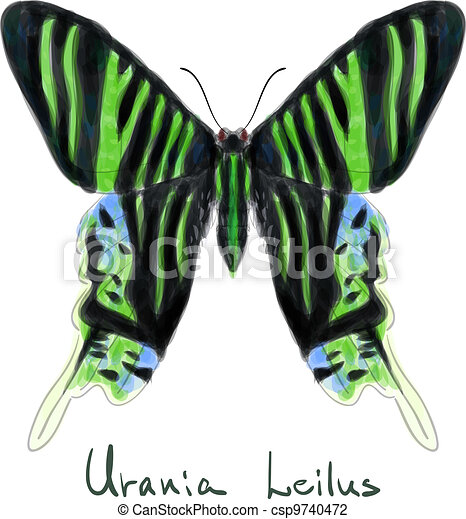 Butterfly Urania Leilus. Watercolor imitation.  - csp9740472