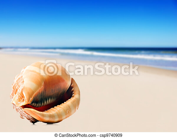 a Beautiful perfectly shaped sea shell on the sandy beach - csp9740909