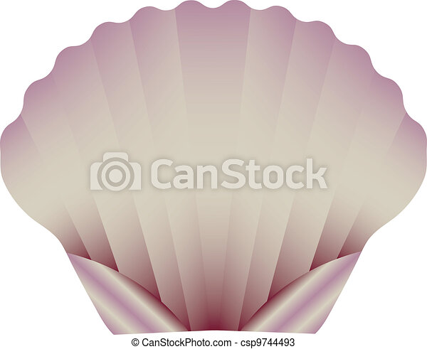 A Sea Scallop Isolated on White - csp9744493