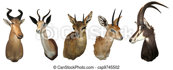 Stuffed animals antelope - csp9745502