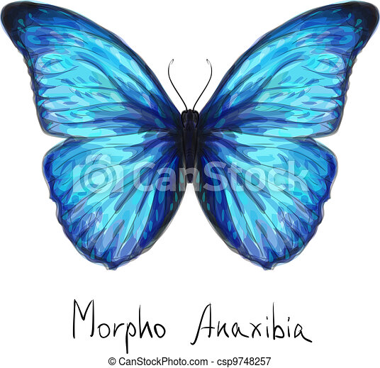 Butterfly Morpho Anaxibia. Watercolor imitation. - csp9748257