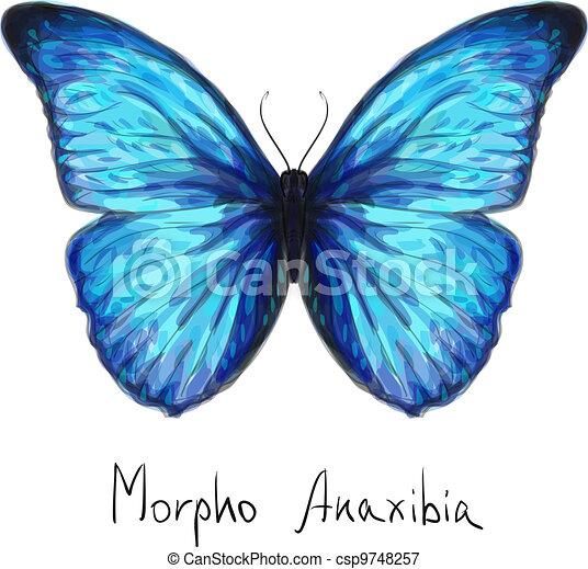 Butterfly Morpho Anaxibia. Watercolor imitation. - csp9748257