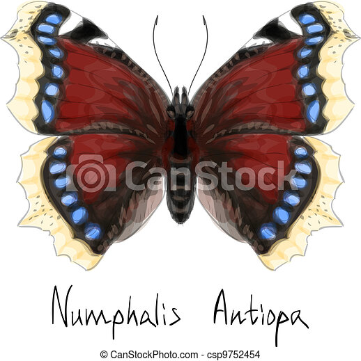 Butterfly Numphalis Antiopa. Watercolor imitation. - csp9752454