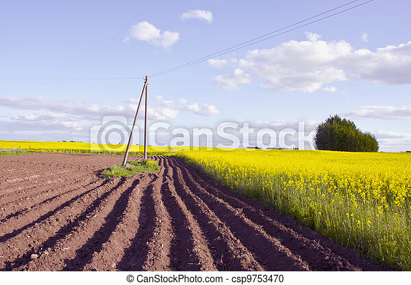 spring landscape with tillage and rapes field - csp9753470