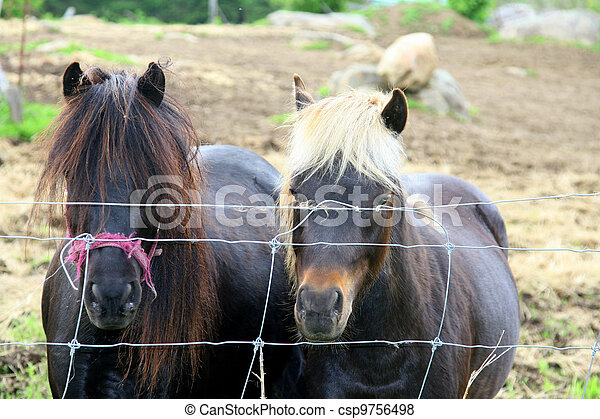 Ponies with black and white manes - csp9756498