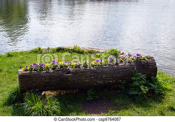 Viola pansy flower growing inside tree trunk pot - csp9764087