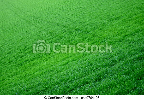 Trail Through Lush Green Field - csp9764196