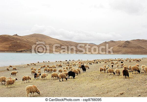 Landscape in Tibet - csp9766095