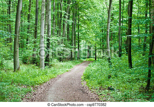 Hiking trail in a green forest - csp9770382