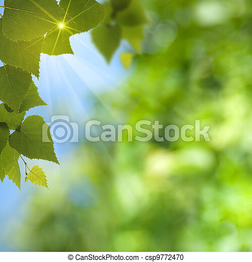 Abstract summer backgrounds with sun beam and leaf - csp9772470