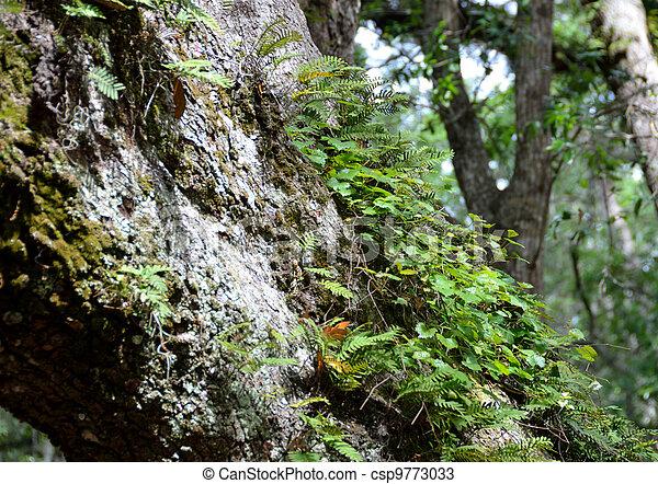 Live Oak Tree Bark