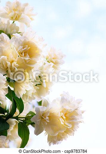 Art  jasmine flowers on blue sky background - csp9783784