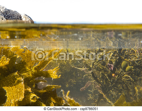 Over-under split shot of clear water in tidal pool - csp9786051
