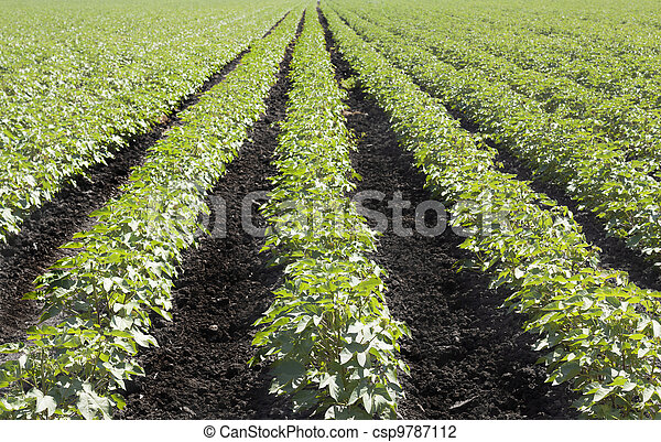 Plants Rows - csp9787112