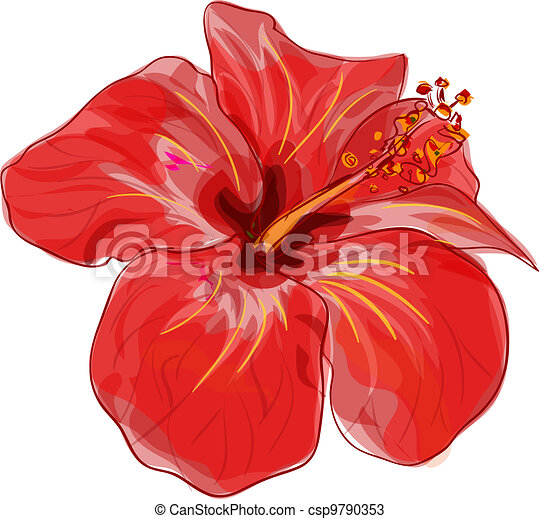 Red hibiscus flower. Vector image. - csp9790353