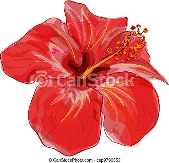 Vecteurs de hibiscus vecteur rouges fleur image rouges hibiscus csp9790353 - Dessin hibiscus ...