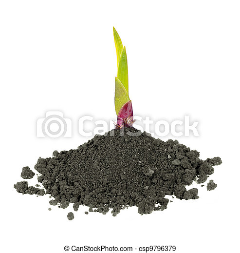 new green plant in dirt  - csp9796379