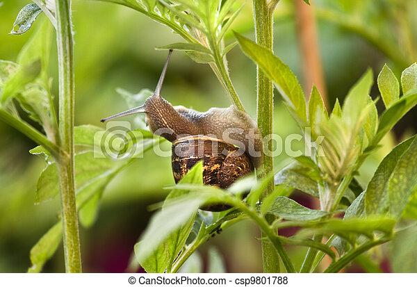 images de plante endommager manger part escargot snail manger csp9801788 recherchez. Black Bedroom Furniture Sets. Home Design Ideas