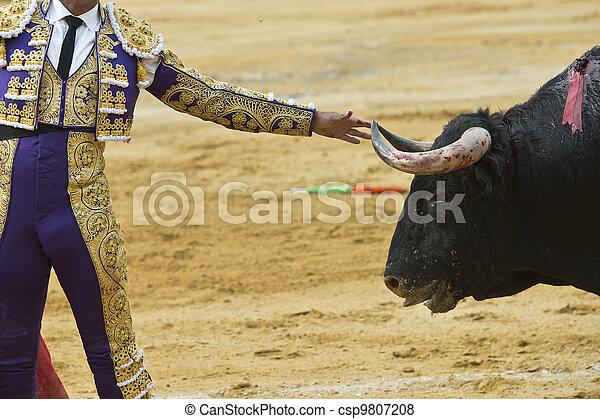 Bullfighter touching the bull´s horn. - csp9807208