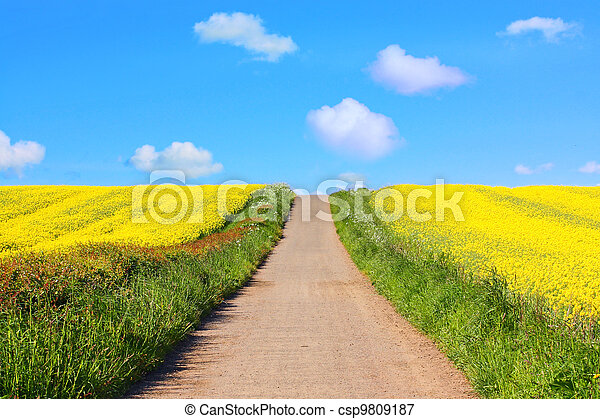 Beautiful fields of rape in Springtime - csp9809187