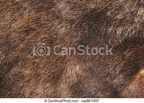 brown bear fur texture