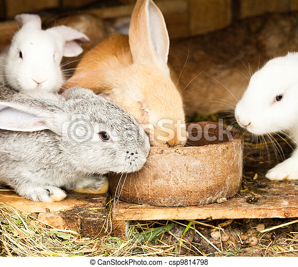 Rabbits' hutch - csp9814798
