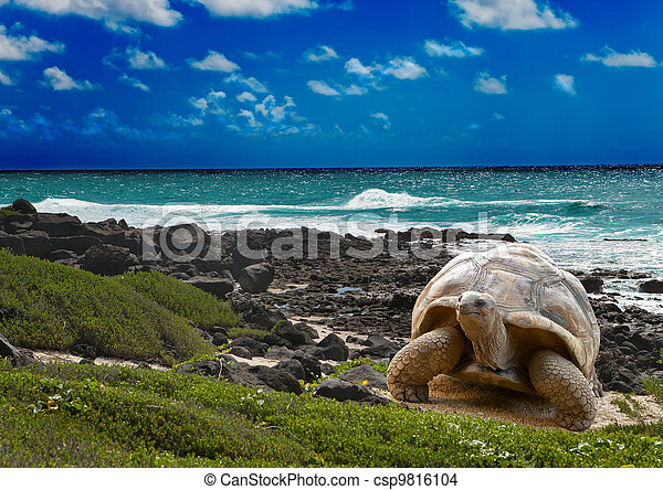 Large turtle  at the sea edge on background of a tropical landscape - csp9816104