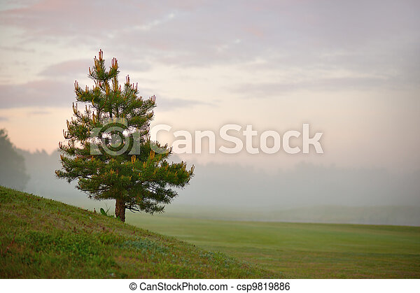Conifer on misty morning - csp9819886