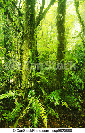 Mossy forest - csp9820880