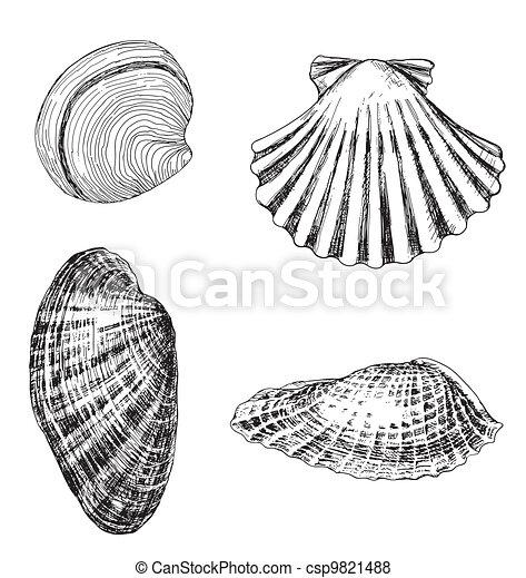 4 shells - csp9821488