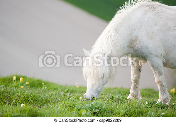 Portrait of farm horse animal in rural farming landscape - csp9822289