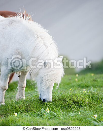 Portrait of farm horse animal in rural farming landscape - csp9822298