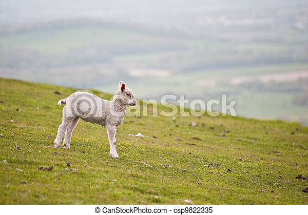 Spring lamd in Spring rural farm landscape - csp9822335
