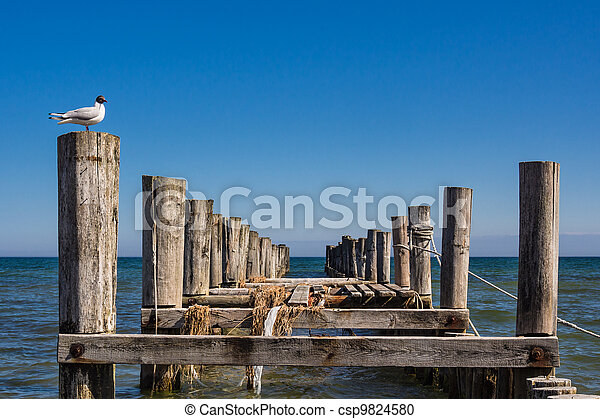 Groyne on the Baltic Sea coast - csp9824580