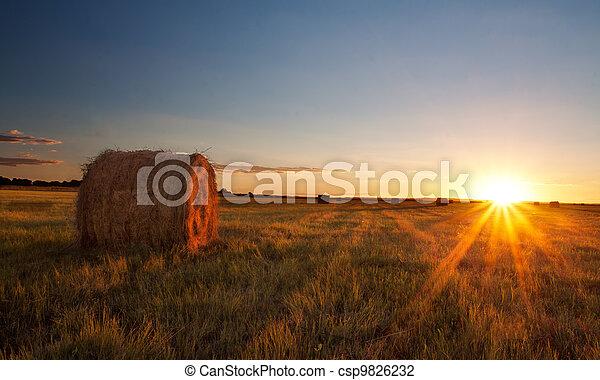 Sunset over grass field - csp9826232