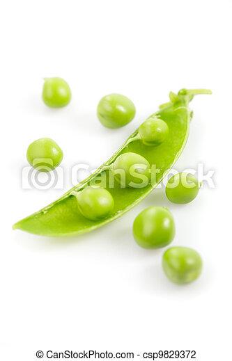 Pea isolated - csp9829372