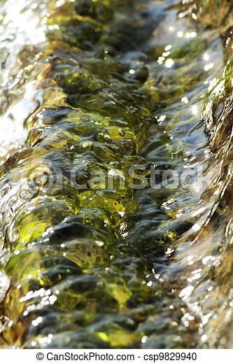 aquatic plants - csp9829940