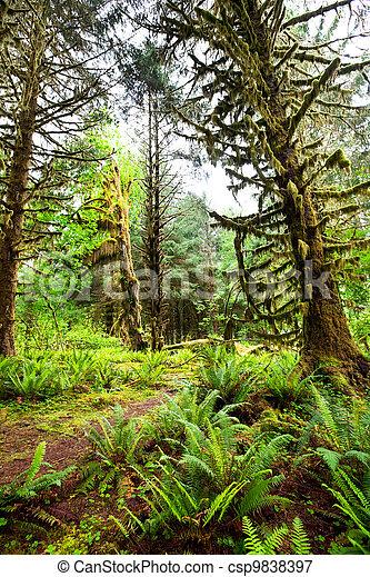 Rain forest - csp9838397