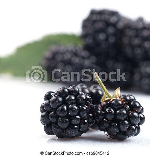 Blackberry branch isolated - csp9845412