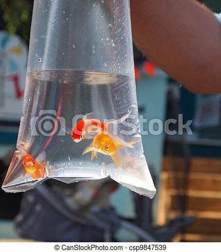 Banque de photographies de poisson rouge sac prix for Prix poisson rouge jardiland