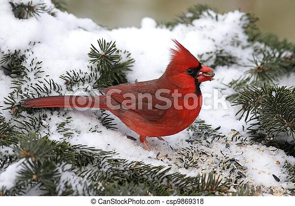 Cardinal In Snow - csp9869318