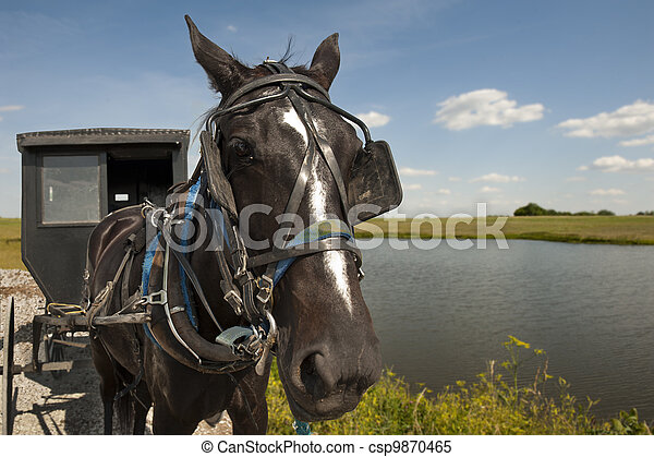 Horse and buggy - csp9870465