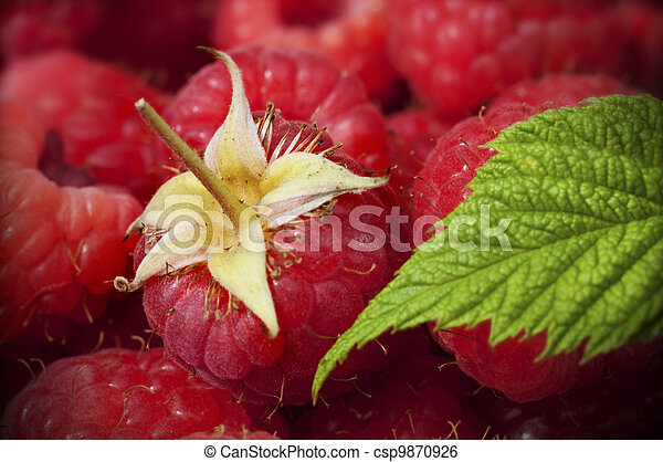 close up of raspberries and one green leaf, horizontal image, there is one entire raspberry - csp9870926