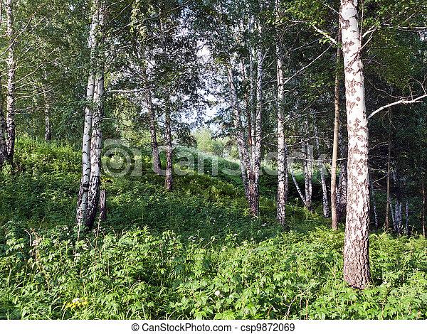 Summer Landscape - csp9872069