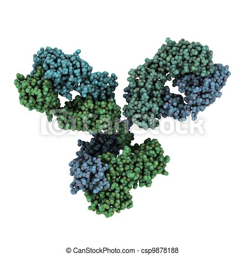 Immunoglobulin G (IgG, antibody) molecule - csp9878188